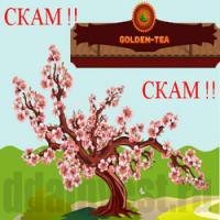 Golden Tea – реальный источник дохода или банальный развод?